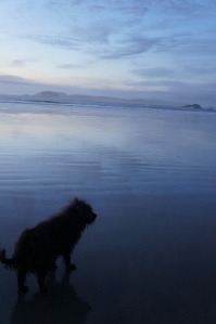 Dog on Beach in Tofino BC